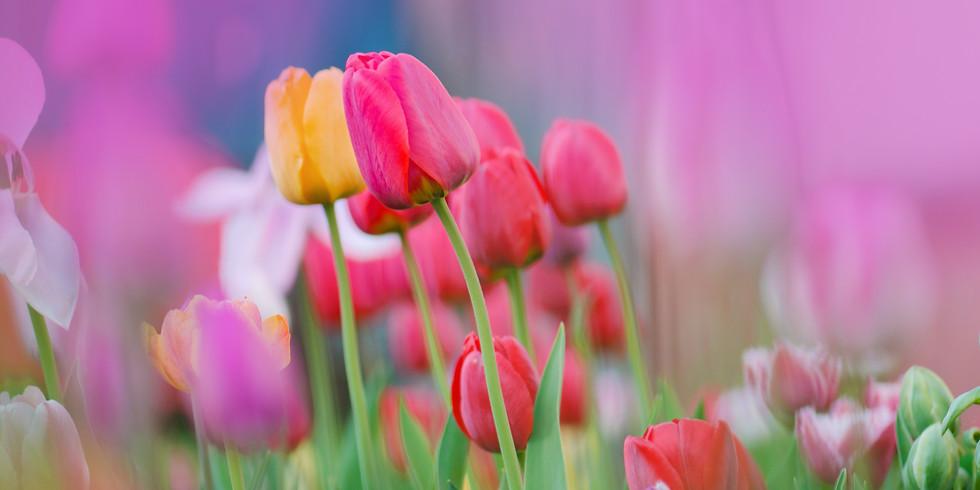 """Tiptoe Through the Tulips"" with me"