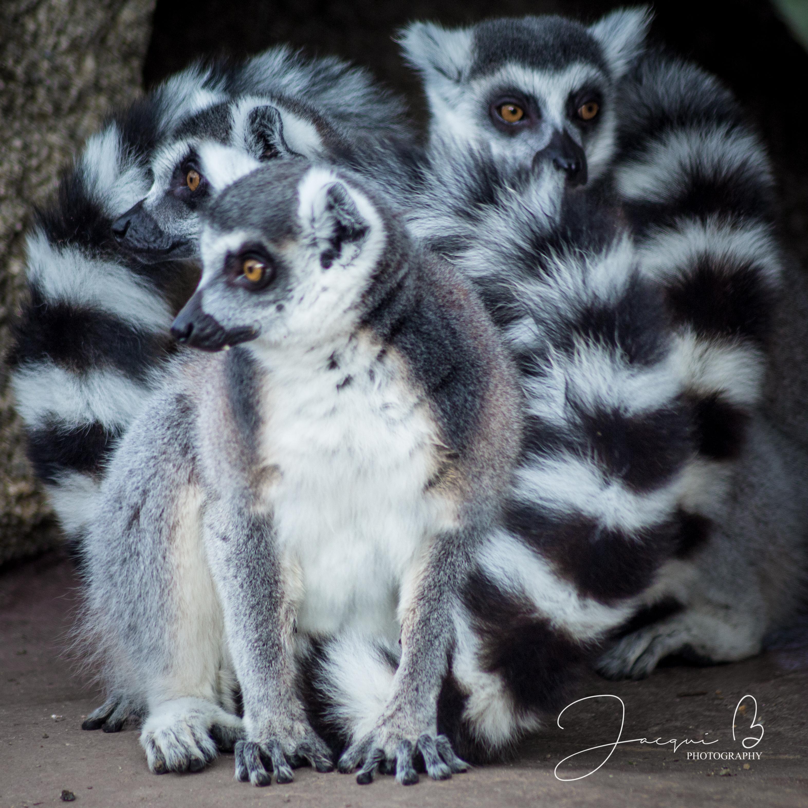 Jacqui B Photography Zoo-