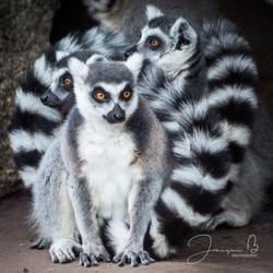 Jacqui B Photography Zoo--2