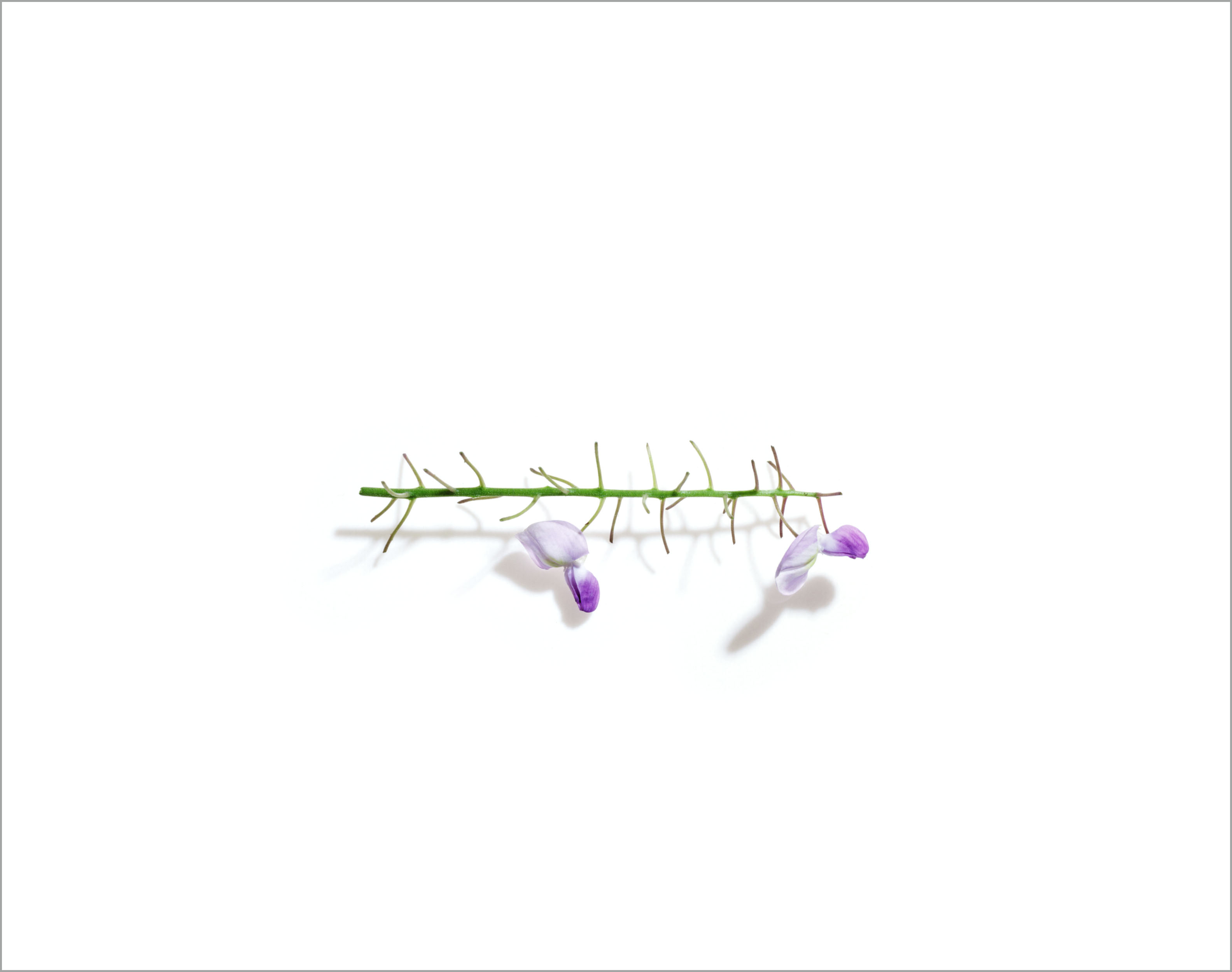 003_flora