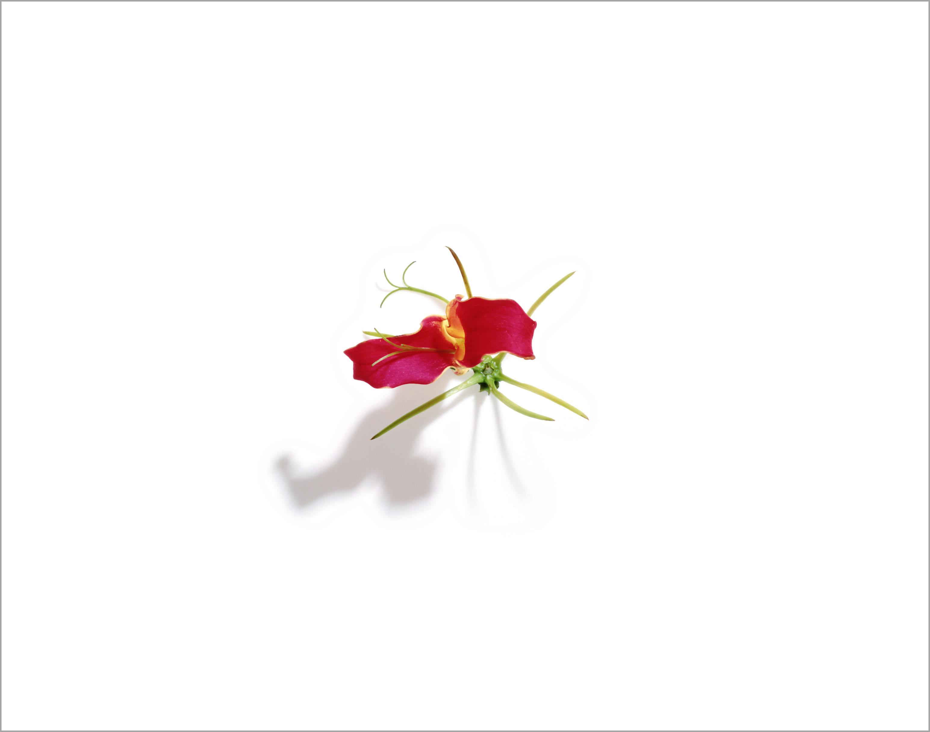 007_flora