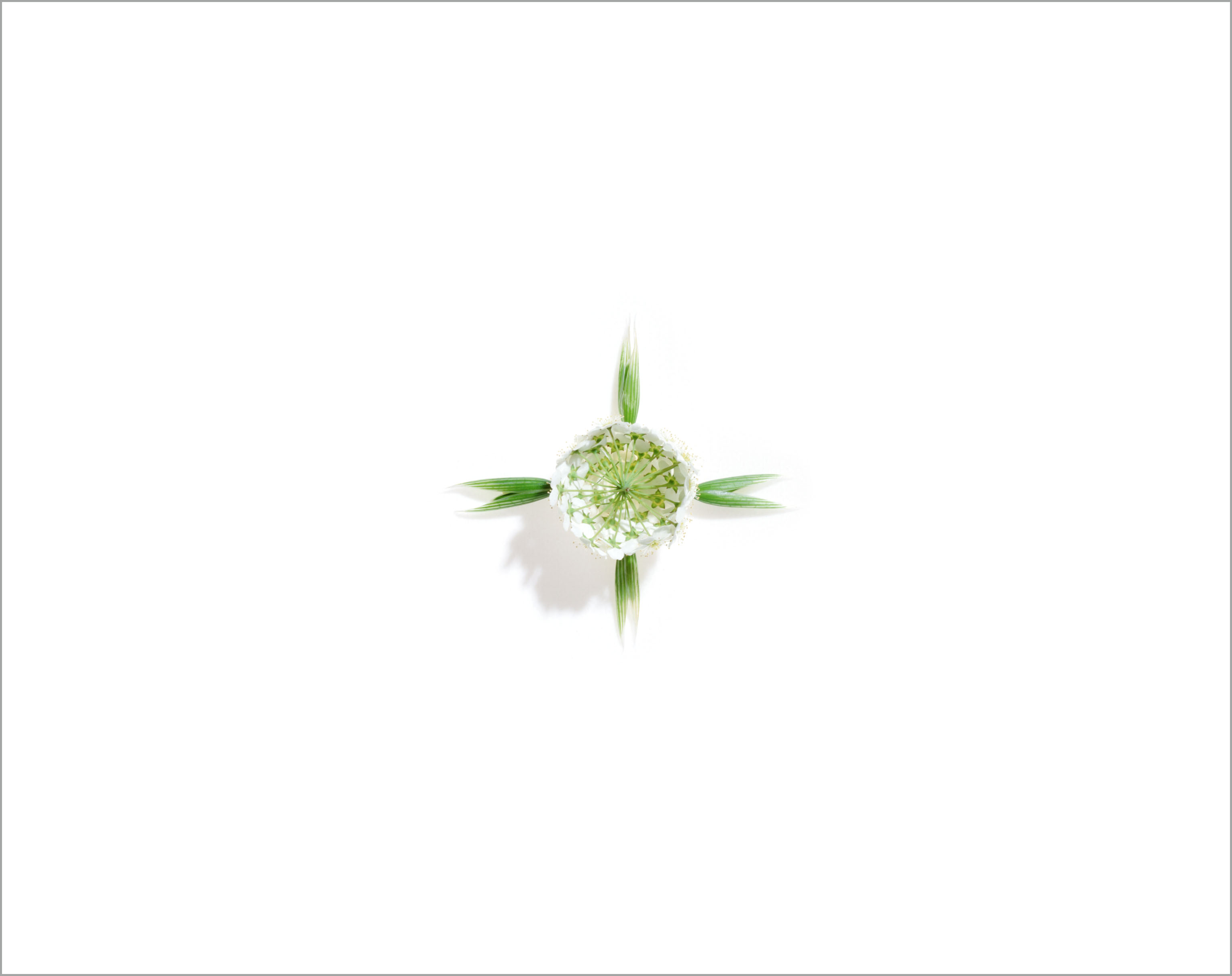 009_flora