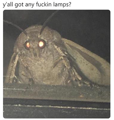 MothMeme.PNG