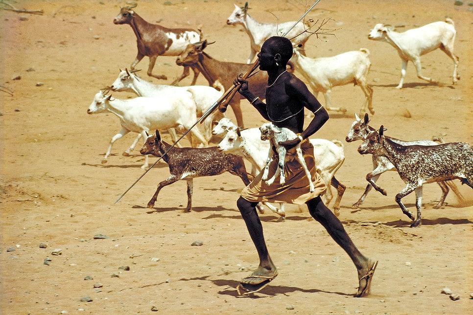 Herder, tribesman, Rendille, Kasut Desert, Kenia