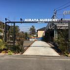 HIrata Nursery KITAKYUSYU