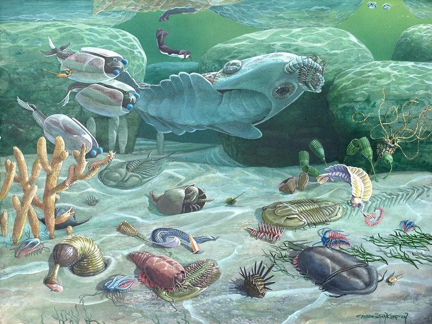 Cambrian Period 1.jpg