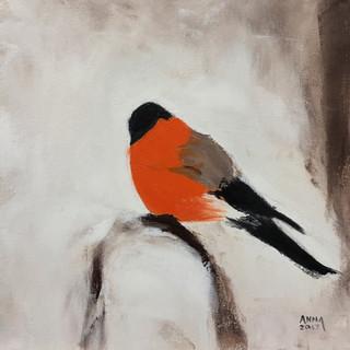 Orange Bullfinch, 2017