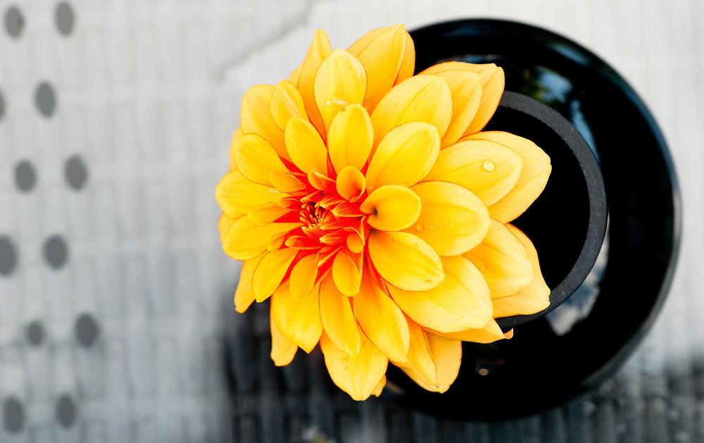 Orange flower in black jar.jpg