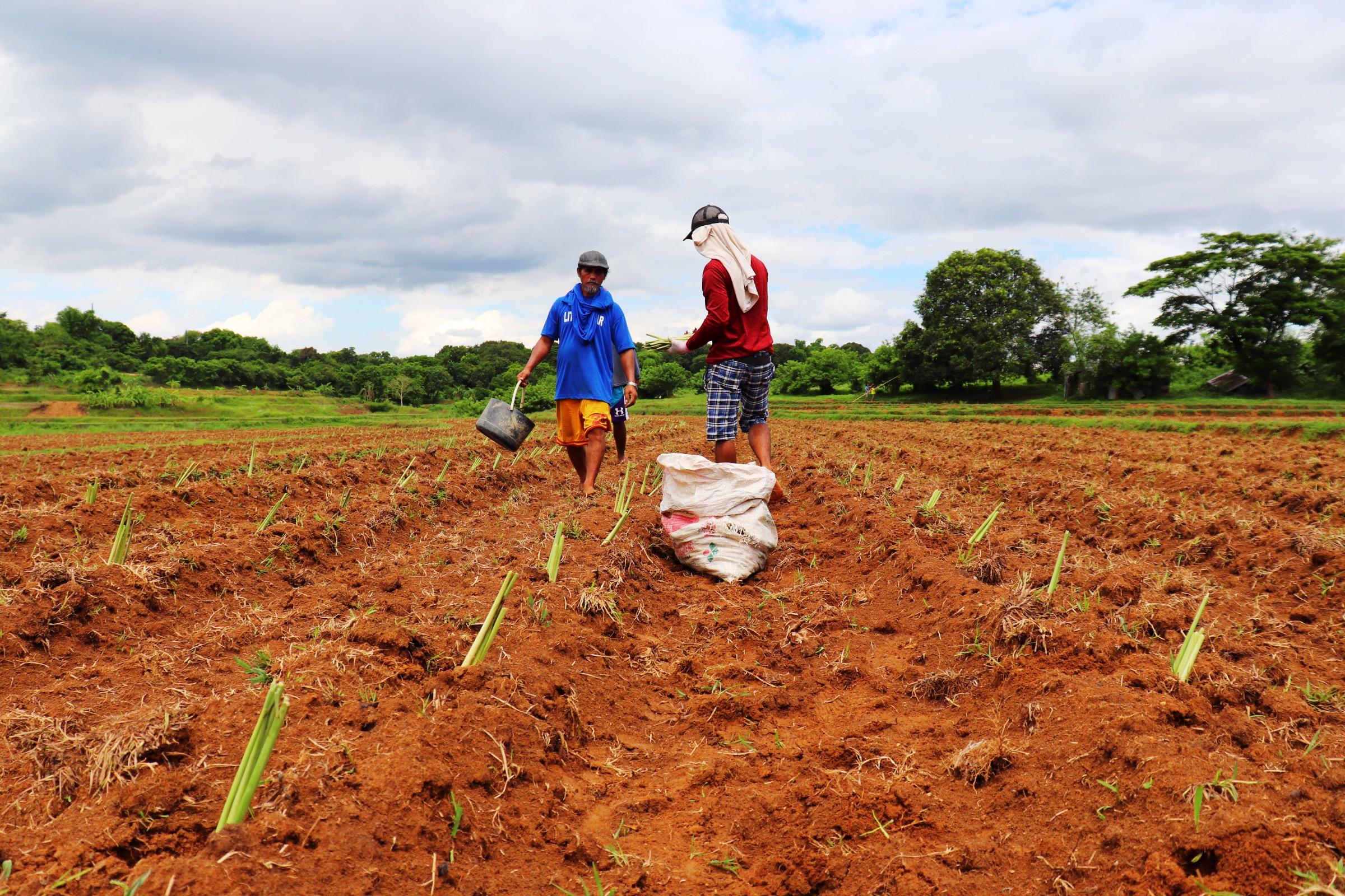 Farming in Bulacan
