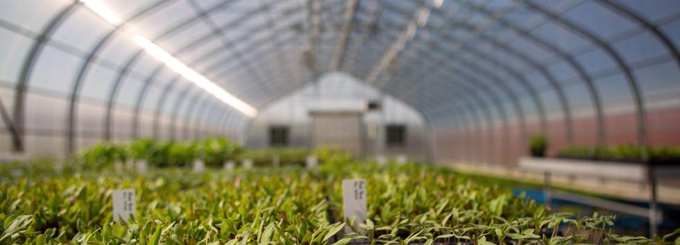 green house Coltivare Culinary Center ithaca_Ramsgard