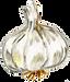 ingredient_garlic.png