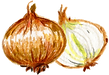 ingredient_onion.png
