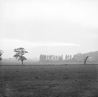 A black and white photo of a misty field, relatively sparse but with some long tall and thin trees in the background.