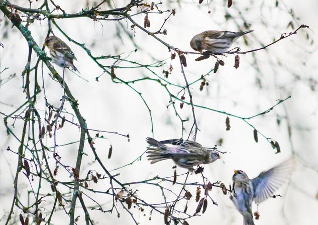 Fugleliv