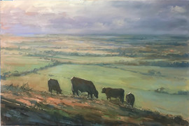 Cattle on the top fields