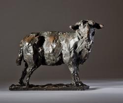 'Wise Lady'.  Zwartbles Sheep