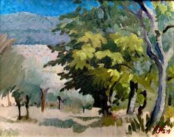 Olive Groves Tuscany