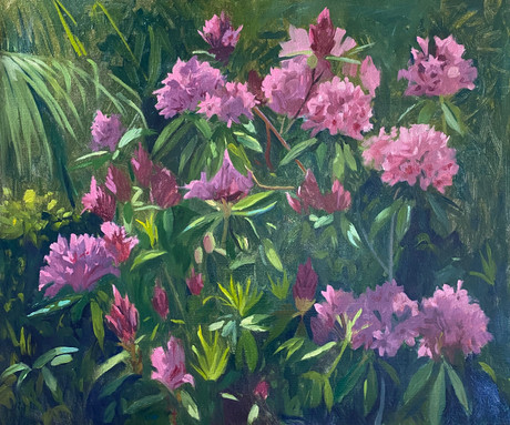 Rhododendrons in the morning light
