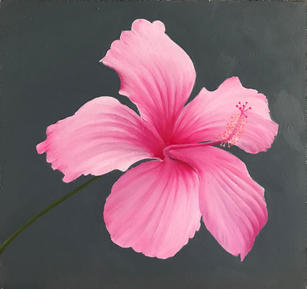 Pale Pink Hibiscus