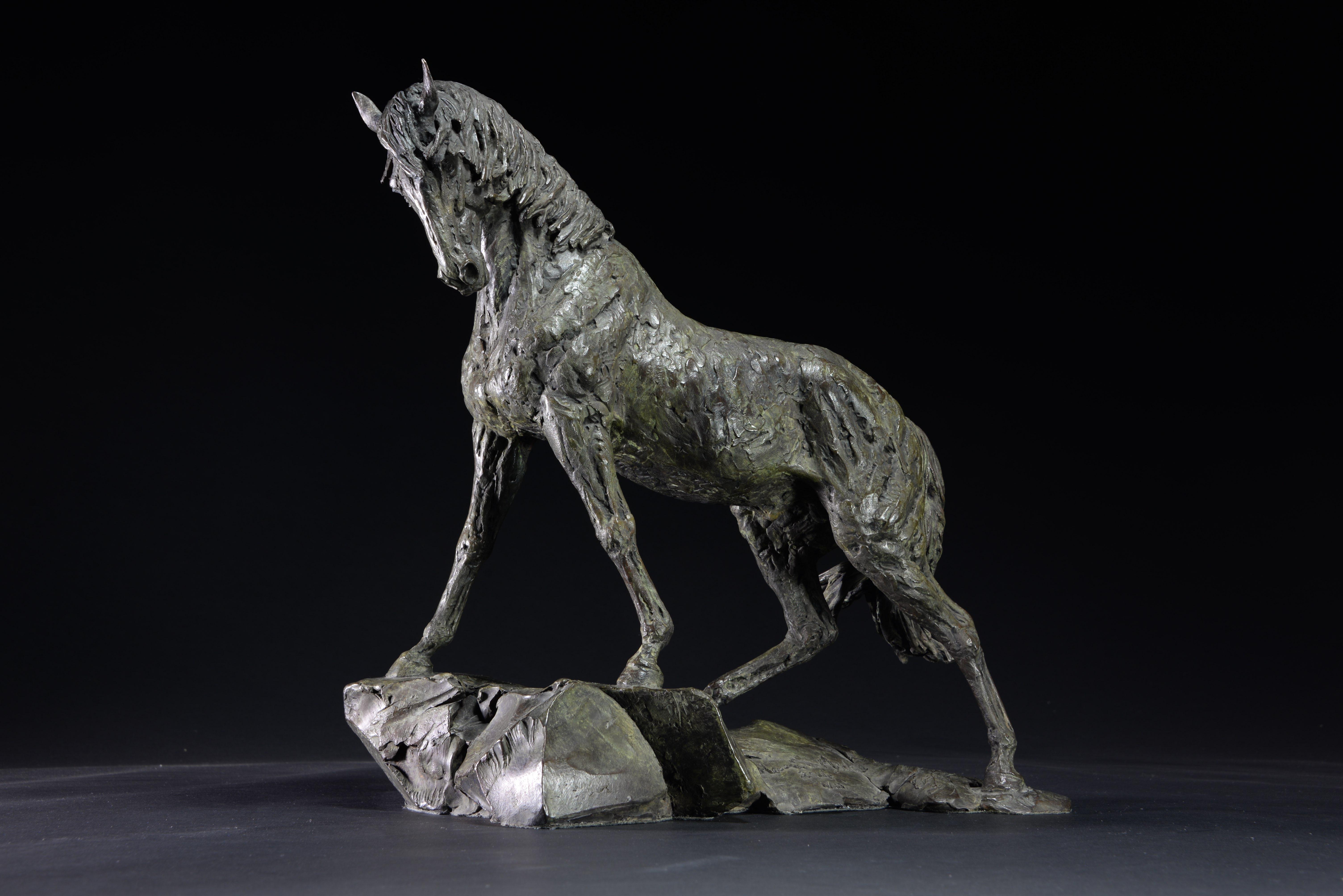 Goodman's Andalusian Stallion.