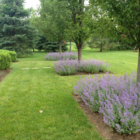 Catmint formal beds