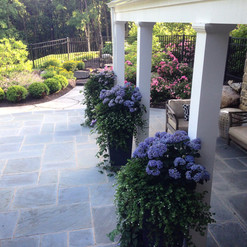 Hydrangea and bacopa accents