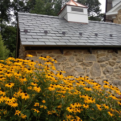 Spring house naturalized