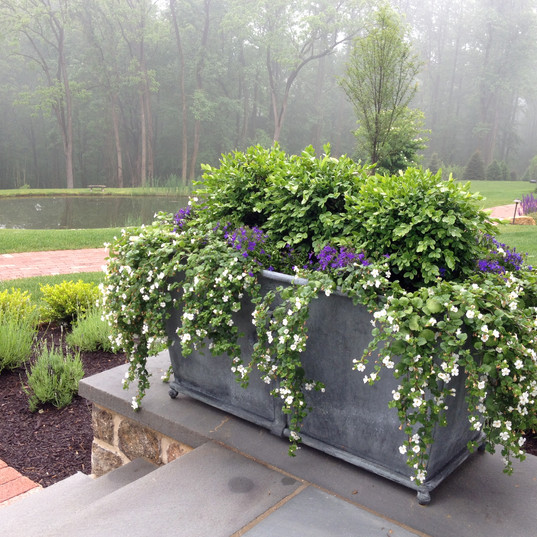Boxwood and bacopa accents