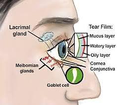 Sist. Lacrimal.jpg