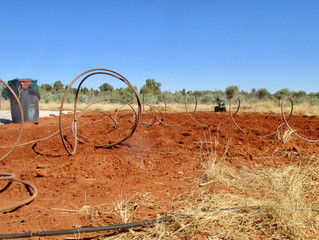 Kings Canyon - new Spring Plantings prepared