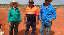 Kings Canyon growers harvest their first crop of Bush Tomatoes