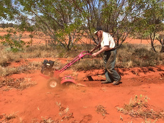 Bush Tomato grower & arid land horticulturist Max Emery works the red land in the heart of Austr