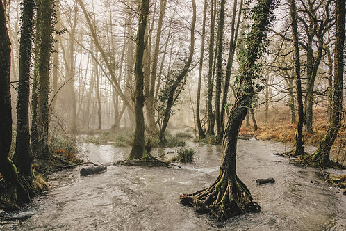 Watery Roots - Print