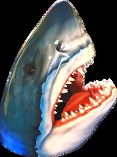 Great White Shark Custom Repaired
