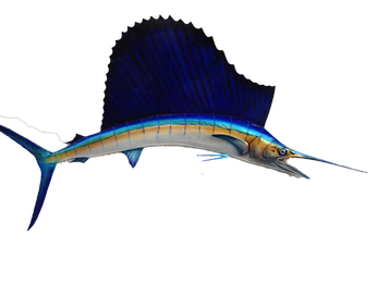 FISH-MOUNT-SAIL-FISH-SAILFISH-FIBERGLASS-TAXIDERMY-FISHMOUNT