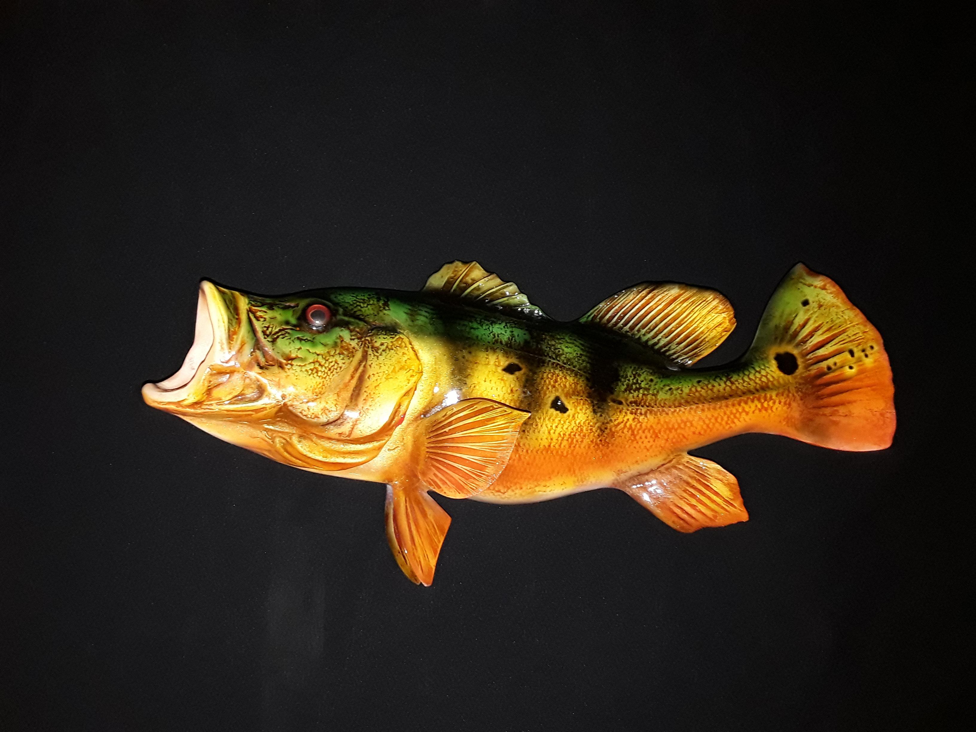 Peacock Bass Full Mount Florida Fish Mounts