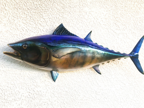 Blackfin Tuna Half Mount