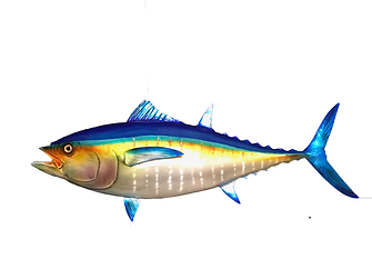 FISH-MOUNT-YELLOW-FIN-TUNA-FIBERGLASS-TA
