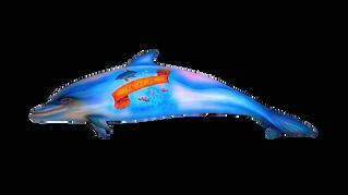 Porpoise / Dolphins