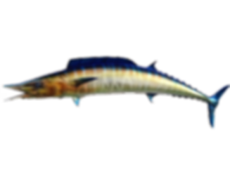 FISH-MOUNT-WAHOO-FIBERGLASS-TAXIDERMY-FISHMOUNT