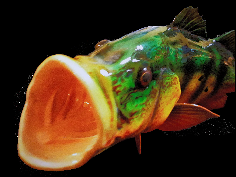 Peacock Bass Full Mount Florida Fish Mou