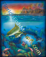 Dolphin' Cove Reef Life