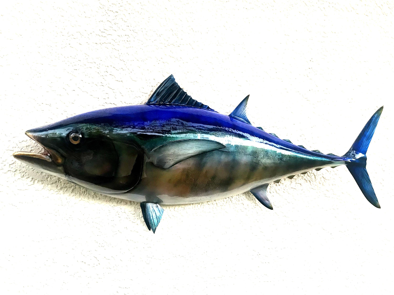 Blackfin Tuna