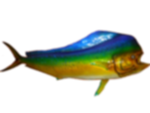Fish-mount-mahi-bull-fiberglass-half-mount-taxidermy-airbrush-greg-cassel
