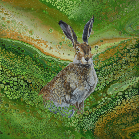 Valley Hare