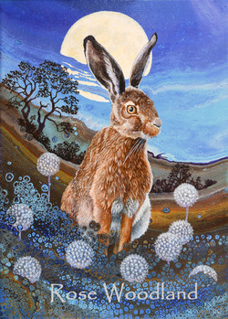Evening Hare