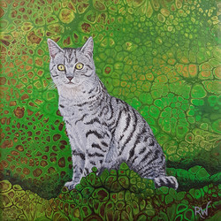 Silver Kitty