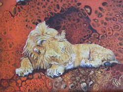 Lazy Lions Detail