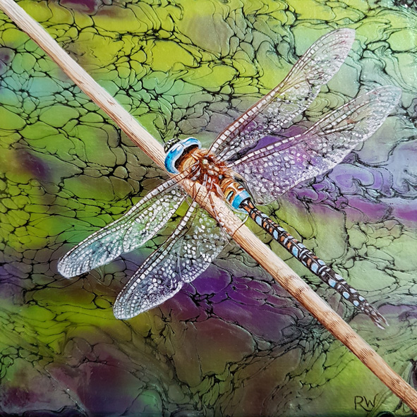 Mica Dragonfly