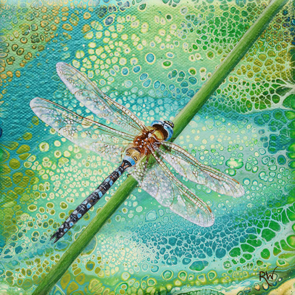 Dragonfly (Migrant Hawker)